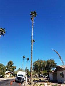 Palm Tree Pruning